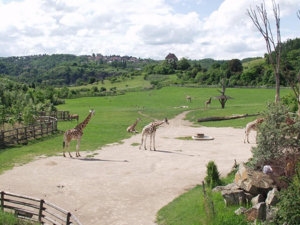 prague-zoo-046-1-1024x768.jpg