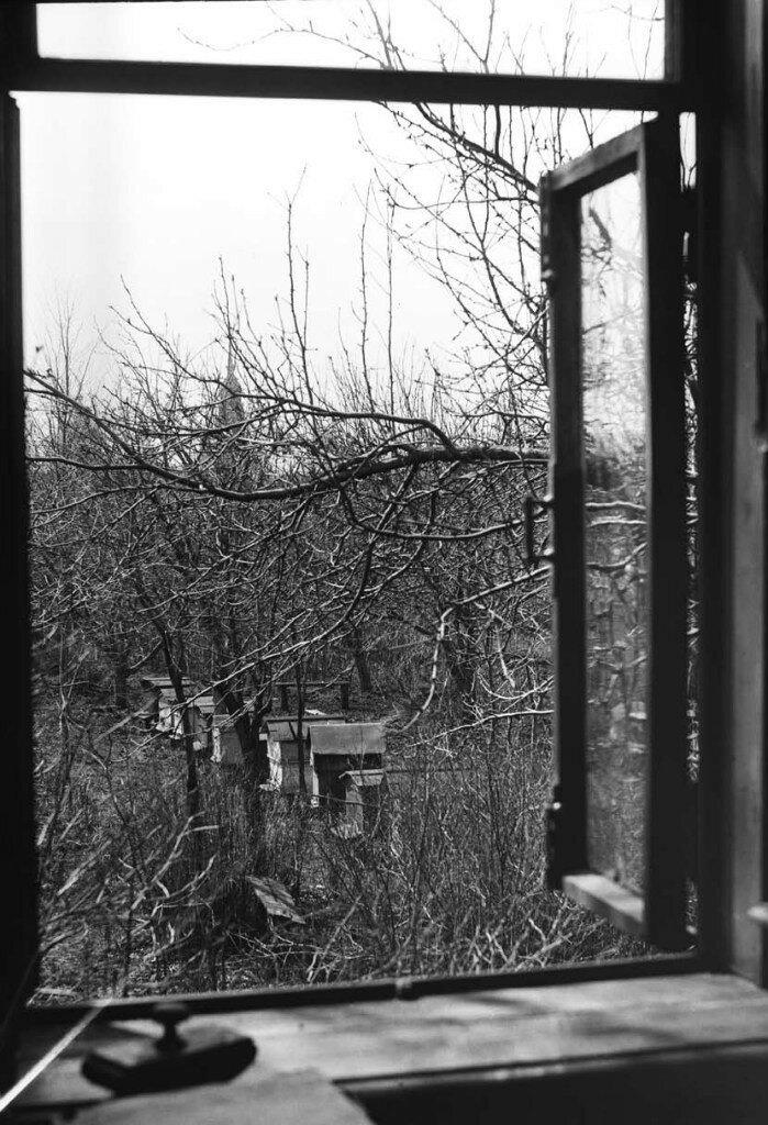 1927. Вид на пчельник из дома священника Пятницкой церкви о.Иоанна Журавлева