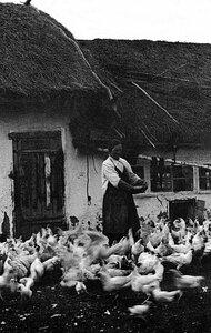 Челябинск. Птичница кормит кур. 1923