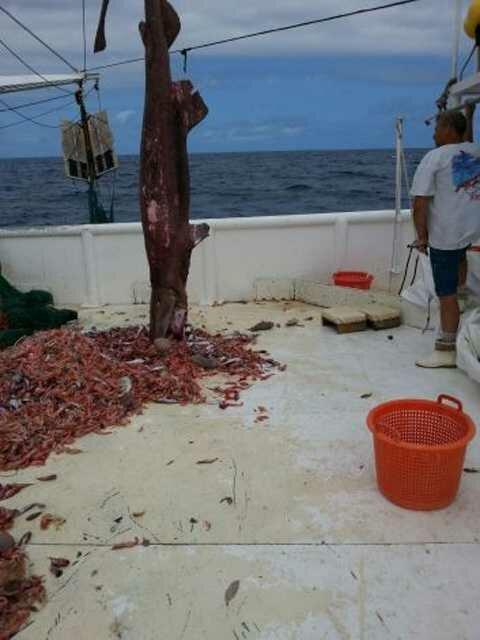 В сети к рыбакам угодил доисторический 5,5-метровый гоблин