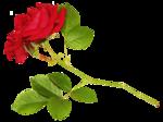thaliris_flowers_el02.png
