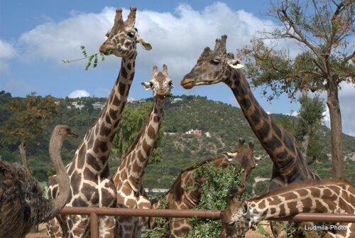 zoosafari