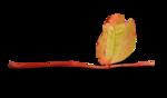natali_design_apple_leaves6-sh2.png