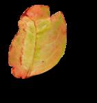 natali_design_apple_leaves6-sh2 (2).png