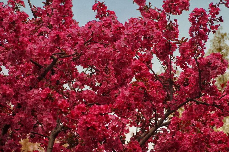 Цвет листьев растений