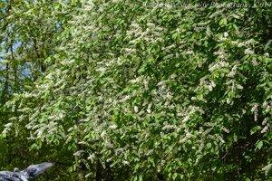 s:листопадные,s:кустарники,s:деревья