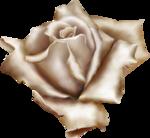 rose4 copy.png