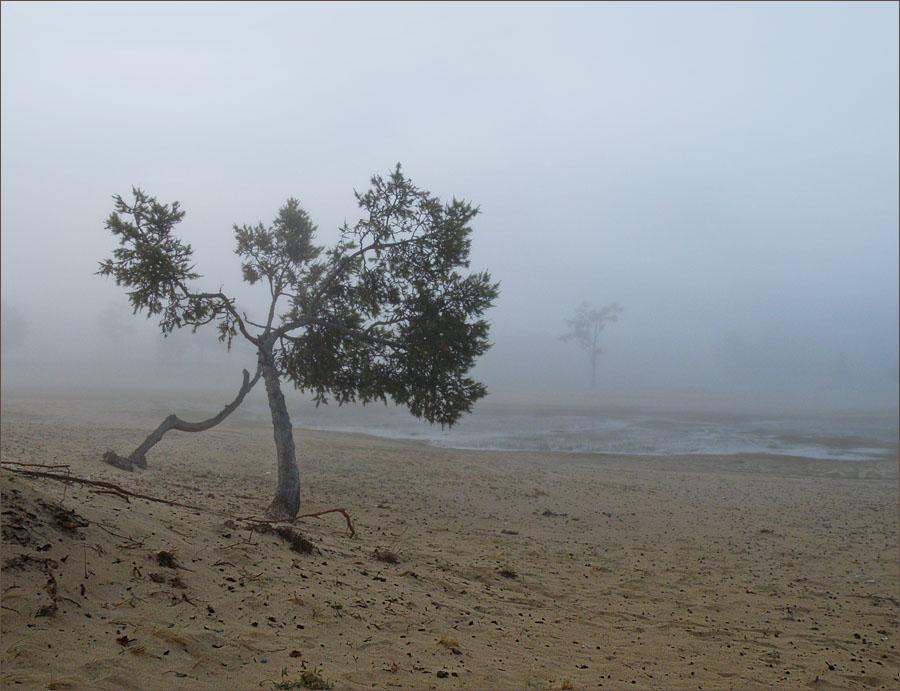 Всё остальное в тумане