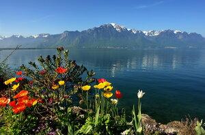 цветы на женевской воде