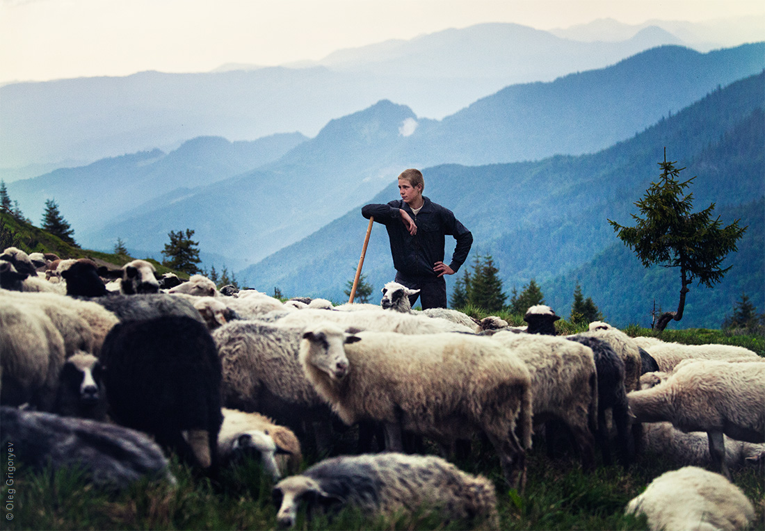 фото пастуха