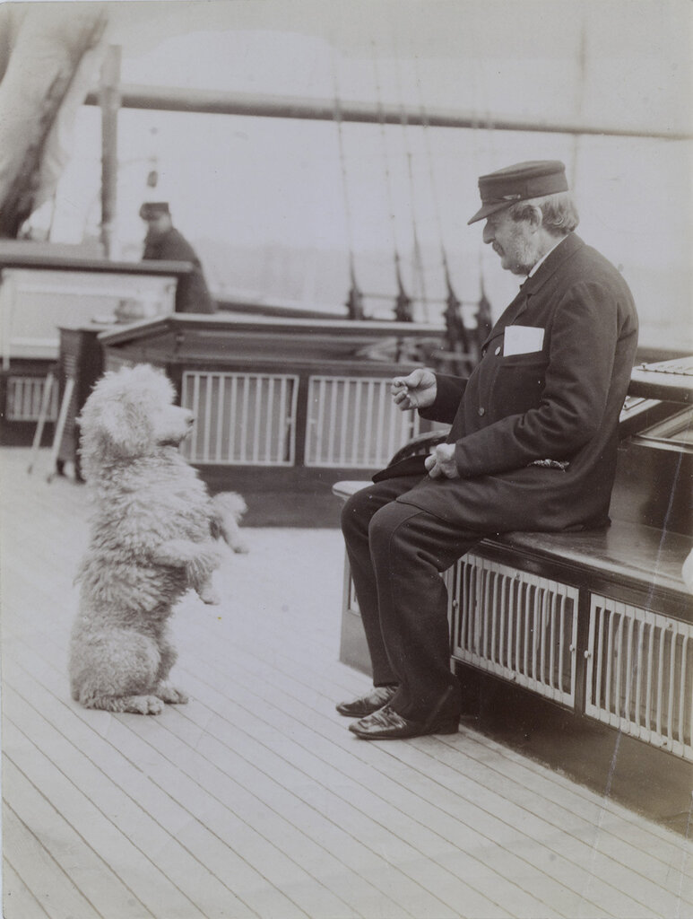 Poodle on board an unknown yacht