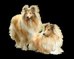Собачки (72).jpg