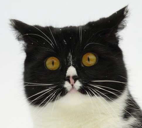 Кошки радуют глаз