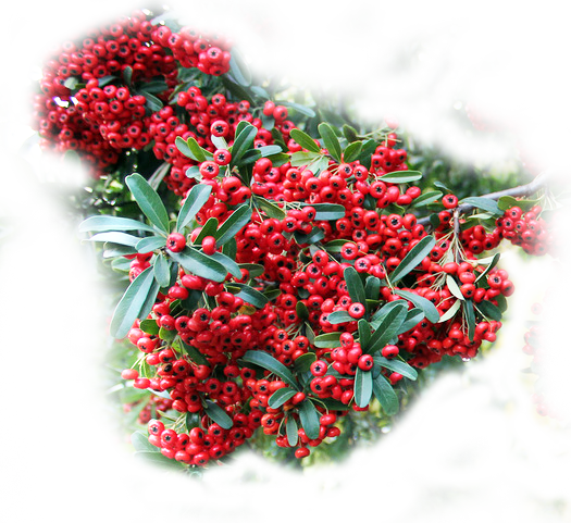 """Фотоконкурс """"Красный"""" 0_907bb_fdd360c5_orig"""