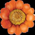 ldavi-gal-flower2.png