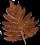 Клипарт Осень в  PNG