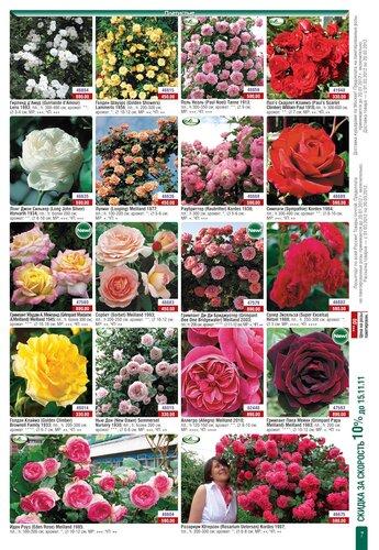 Каталог розы 2012! Открыт приём заказов! www.gardenshop.ru