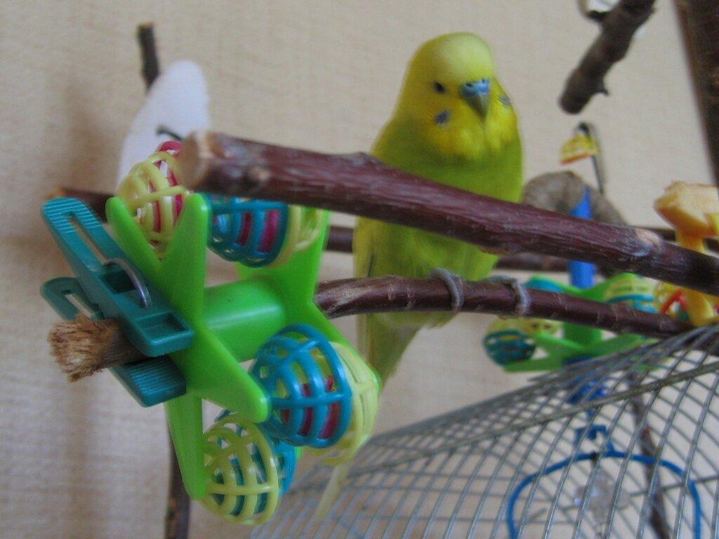 Что можно сделать волнистому попугаю своими руками фото 157