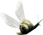 ldavi-paintersfaeries-flyingsnail.png