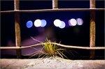 zd-most-IMG_0478.jpg