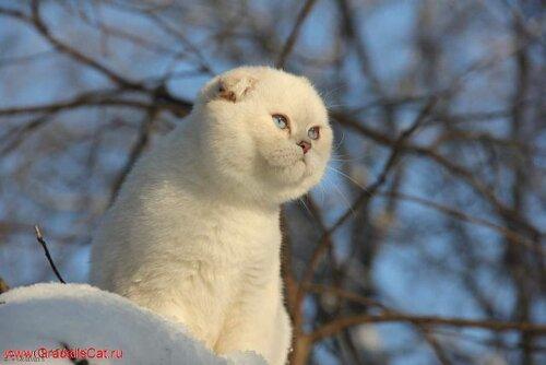 http://img-fotki.yandex.ru/get/5309/131941824.e/0_145979_715b855e_L.jpg