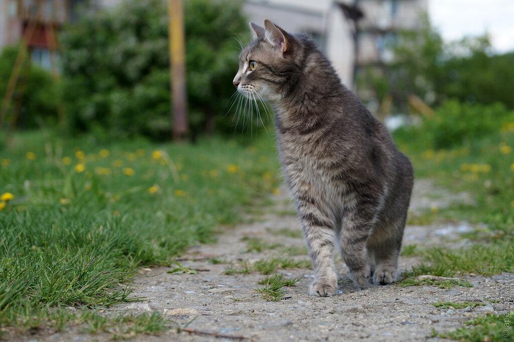 Летняя прогулка с котом