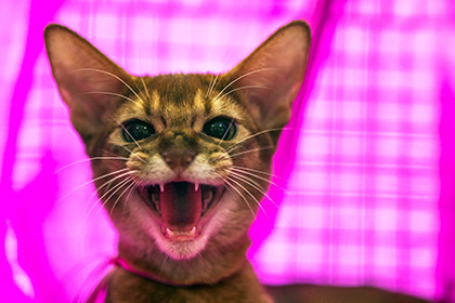 Из приюта для животных было украдено 15 кошек