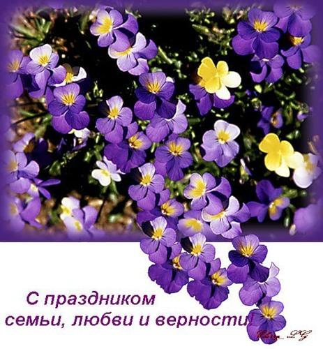 Картинки с праздником семьи, любви и верности. Цветы