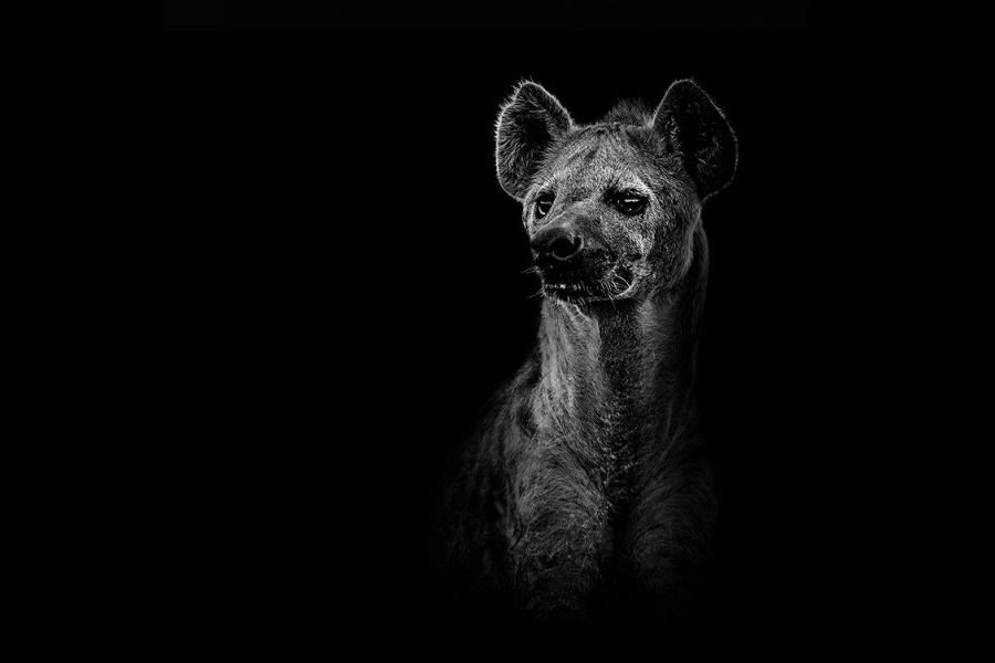 Лукас Холас. Черно белые портреты животных 0 1419dc b33dda82 orig