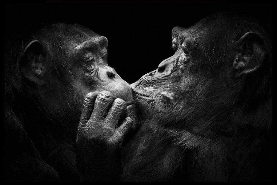Лукас Холас. Черно белые портреты животных 0 1419e0 8275ccdb orig