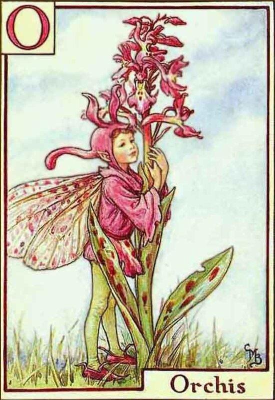 Инициал О. Эльф и орхидея. Сесиль Мери Баркер.