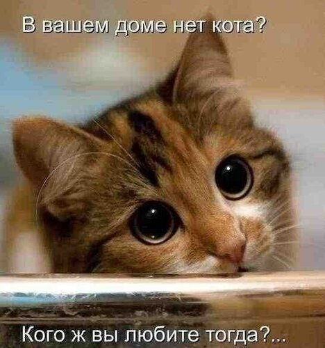 http://img-fotki.yandex.ru/get/5309/247009576.8/0_f63a0_b323230f_L.jpg