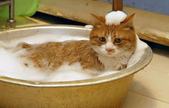 Правильный уход за шерстью кошек