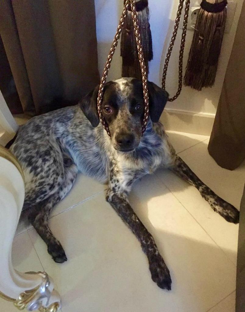 Стивен собака из приюта догпорт