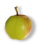 natali_design_apple1-sh2.png