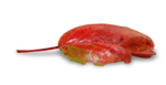 natali_design_apple_leaves3-sh.png