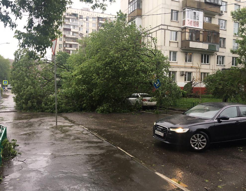 Но так повезло не всем. Момент падения дерева во время урагана в Москве на двух молодых девушек