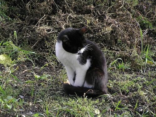 Кот на клумбе
