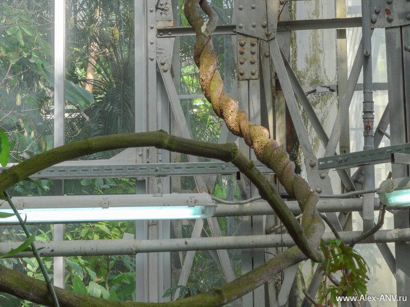 Ствол этого дерева оплела хищная лиана. Впрочем дерево ответило лиане взаимностью.