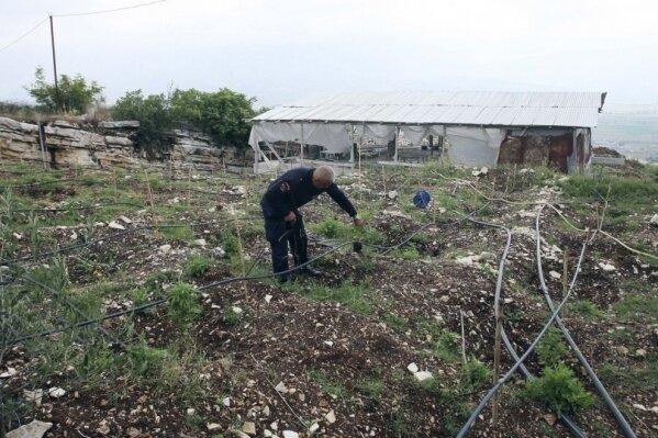 Албания, наркомафия