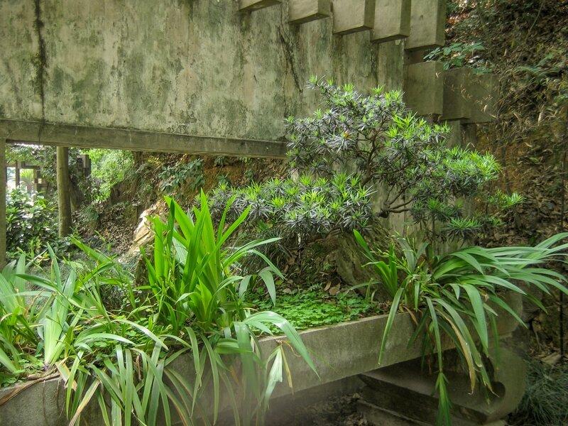 Садик в плошке, Ханчжоу