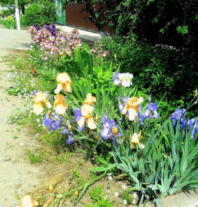 В мае, в мире цветов