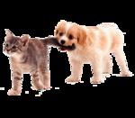 Собачки (139).jpg