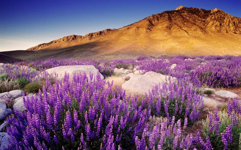 Sierra Nevada Range, CA