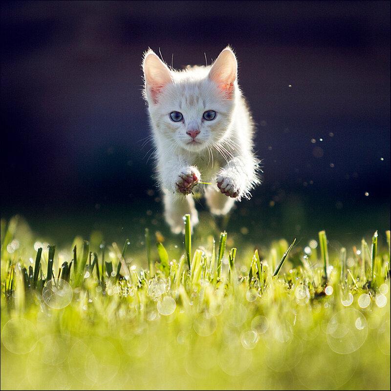 Движущиеся картинки коты, днем рождения