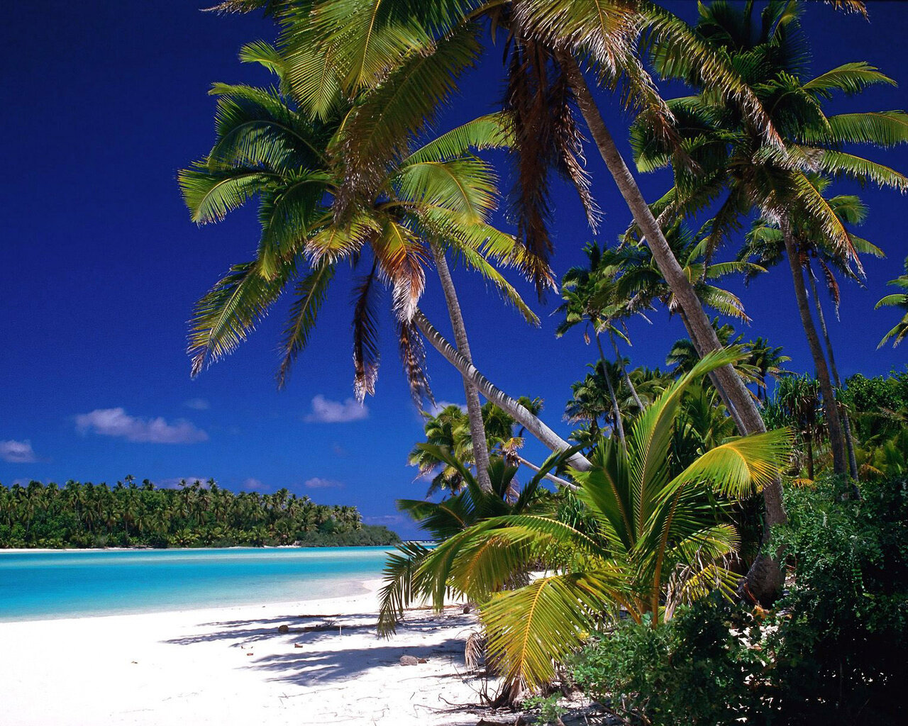 10 Most Popular Beautiful Beach Backgrounds Palm Trees: Paysage Exotique