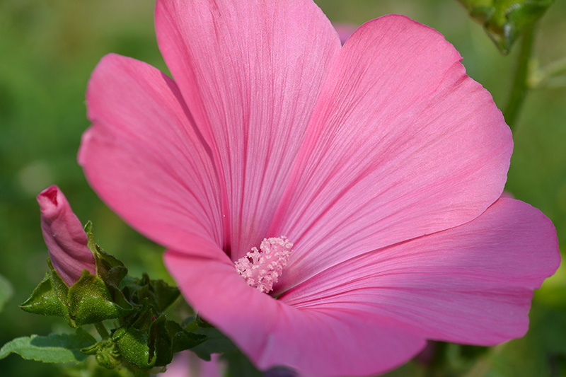 цветочное 9 16.jpg