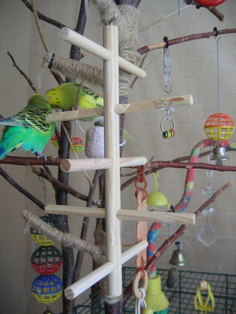 Что можно сделать волнистому попугаю своими руками фото 472