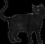 rs_blackcat9.png