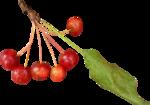 осенние тропинки (76)